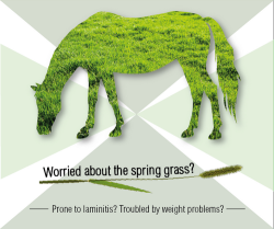 Worried about the spring grass? Prone to laminitis?