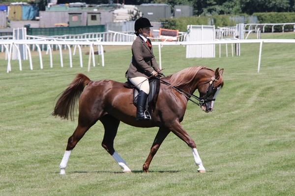 Annia Aurelia in the HOYS Championship at Aintree p.c. Equinational