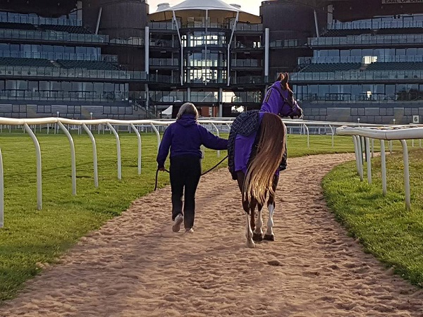 Annia Aurelia walking out in hand at Aintree p.c. Katherine Bertram