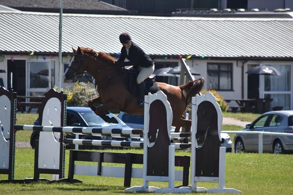 Avonbrook Odin jumping a double clear (110cm-120cm) a t Wales and West p.c. Showground Photography