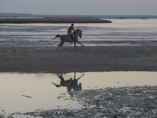 rider on the beach in bahrain