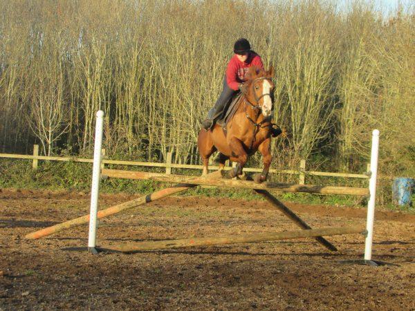 Avonbrook Odin having a jump at home (c) Rowena Bertram