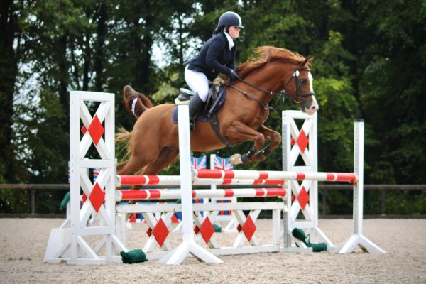 Marcus Aurelius jumping at Rectory Farm (c) JHemming Photography