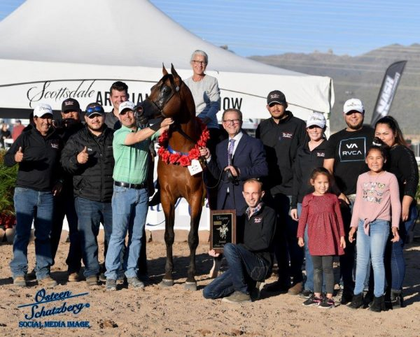 Horse with team