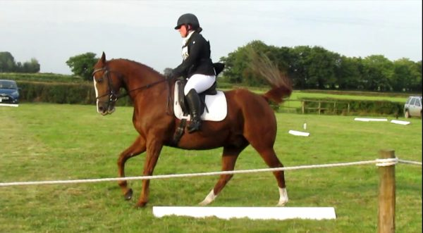 Avonbrook Odin in the dressage at Pontispool (c) Rowena Bertram