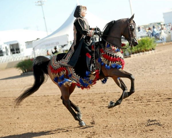 Arabian horse in costume