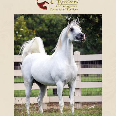 A sample cover for The Arabian Breeders' Magazine Collectors' Edition.