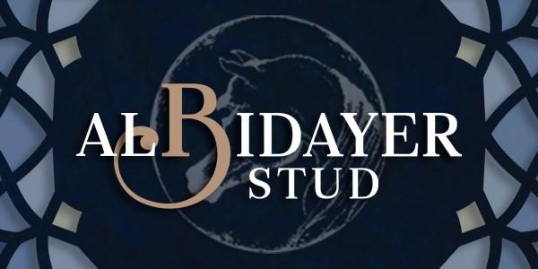 Albidayer Stud