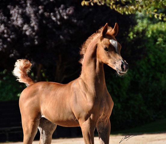 Barzan Al Shahania at three months old
