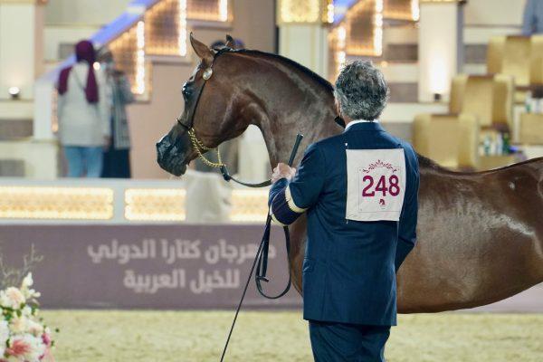 Fadi Al Shaqab