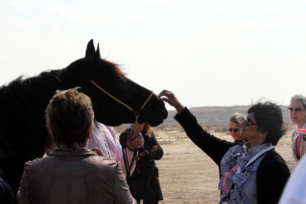 stallion and friend