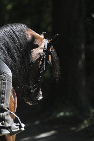 Kanz Albidayer under saddle