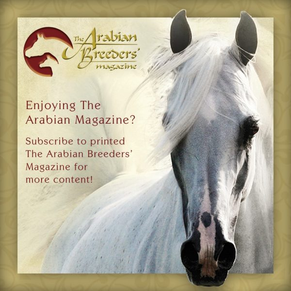 Subscribe to The Arabian Breeders' Magazine